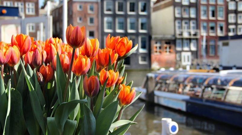 Museum Quarter Amsterdam - Tulip Festival Amsterdam